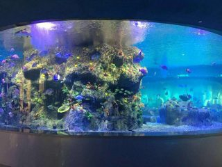 fabriek verskaf visbakke, ronde glastenk akwariums