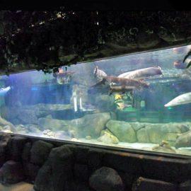 Gepasmaakte luukse ontwerp onderwater Dik akrielpanele Akwarium venster Glass Sheet