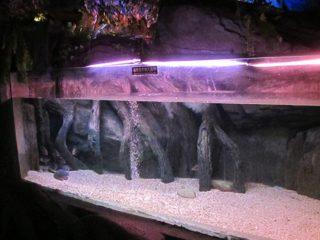 Akriel swembad paneel / venster vir Underwater Sea World