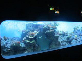 Kunsmatige Cast Akriel Silindriese Transparante vis akwarium / venster