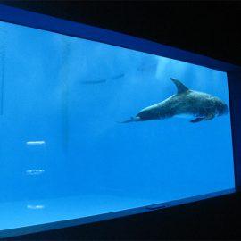 hoë kwaliteit Groot akriel akwarium / swembad venster onderwater dik vensterglas