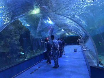 Aangepaste plexiglas akriel tonnel akwarium