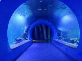 Hoogduidelike groot akriel tonnel akwarium van verskillende vorms