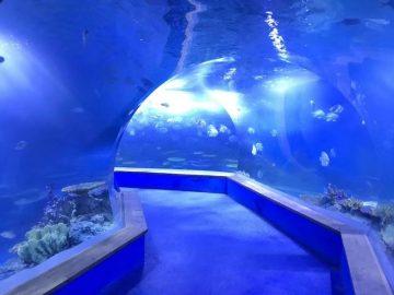 deursigtige akrielglas Tunnel akwarium